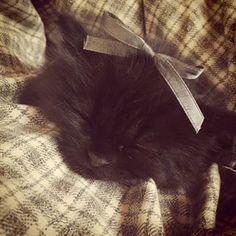 #cute #black #kitten #grey #ribbon #vintage #pet #favorite #adorable #kittensfarm Black Kittens, Grey Ribbon, Photo And Video, Pets, Animals, Vintage, Instagram, Animaux, Animal