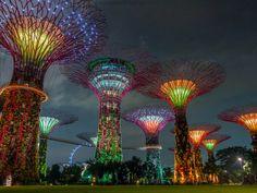 HSBC super trees of Singapore - Photograph at BetterPhoto.com