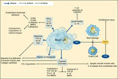 Mast Cells and atherosclerosis (excellent article on mast cell activity)