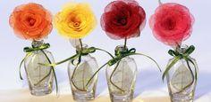 Esqueletização de folhas e Flores