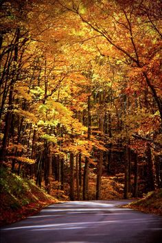 How to Decorate a fall colors landscape that will blow your mind Beautiful Places, Beautiful Pictures, Beautiful Beautiful, Autumn Scenes, Smoky Mountain National Park, All Nature, Fall Pictures, Beautiful Landscapes, Paths