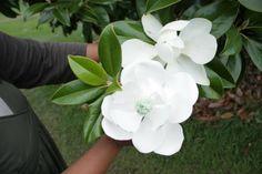 The Gumpaste Magnolia Tutorial Part 3: Assembling - Cakerator