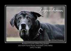 Dog in Mansfield, OH - His name is Leprechaun. PLEASE help him find a loving home... thank you!