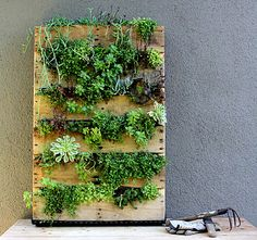 For a DIY version of the indoor garden, use a recycled palette and fill the cracks with the plants of your choice. Check out the helpful tutorial from Fern Richardson of Life on the Balcony. [via Design Sponge]