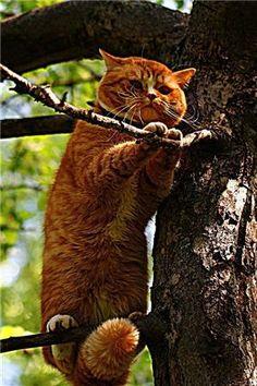 -Garfield-  Help!
