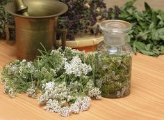 7 Essential Medicinal Plants to Grow and How To Use Them Healing Herbs, Medicinal Plants, Valerian Tea, Yarrow Plant, Common Garden Plants, Achillea Millefolium, Herbal Remedies, Perennials, Planting Flowers