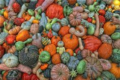 Gourds and Pumpkins / Flickr - Photo Sharing!