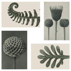 "YLLEVAD Art card, botanical details, 4x6"" - IKEA Karl Blossfeldt, Ikea Art, Art Carte, Paper Packaging, Bathroom Art, Picture Frames, Detail, Create, Pictures"