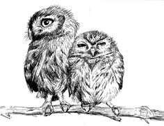 Burrowing Owls on Branch - Pen and Ink http://www.etsy.com/listing/104143486/burrowing-owls-on-branch-pen-and-ink