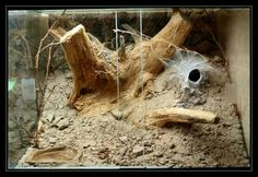 terrarium for tarantulas Tarantula Habitat, Tarantula Enclosure, Vivarium, Tortoise Enclosure, Reptile Enclosure, Aquarium Terrarium, Tortoise Care, Easy Pets, Pet Turtle
