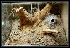 terrarium for tarantulas