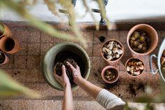 Blumenzwiebeln pflanzen Gardening, Archetypes, Wood Watch, Blog, Ground Cover Plants, Shade Perennials, Planting Shrubs, Wooden Clock, Lawn And Garden