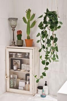 bathroom plants.