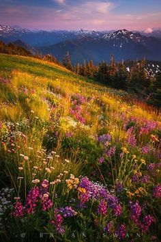 Wild Flowers Inspiration : ~~The Spectrum ~ dusk atop a wildflower meadow, North Cascade Mountains, Washing.tn - Leading Flowers Magazine, Daily Beautiful flowers for all occasions Beautiful World, Beautiful Places, Beautiful Pictures, All Nature, Amazing Nature, Spring Nature, Mother Earth, Mother Nature, Cascade Mountains