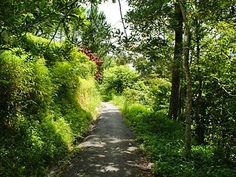 Things to do - Penang, Malaysia - Guide Southeast Asia Batu Ferringhi, Secluded Beach, Hiking Trails, Southeast Asia, Things To Do, Country Roads, Things To Make, Walking Paths