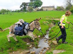 Courtesy: The Donkey Breed Society. Crockham Hill, Edenbridge, Kent (UK).