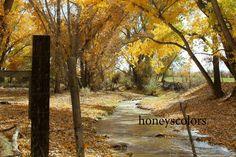 Landscape Photography - Fall - Trees - Autumn - Road - Fine Art Print - Nature Home Decor