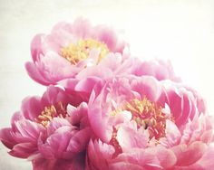 Photography  pink peony print  floral wall art  by LupenGrainne