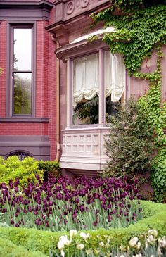 """- Commonwealth Avenue """"Bay Window & Purple Tulips"""" Boston's Backbay - Commonwealth Avenue """"Purple Tulips at Windows Bay""""Boston's Backbay - Commonwealth Avenue """"Purple Tulips at Windows Bay"""" Victorian Architecture, Architecture Details, Pink Houses, Old Houses, Gates, Beautiful Flowers, Beautiful Places, Beautiful Life, Beautiful Gardens"""