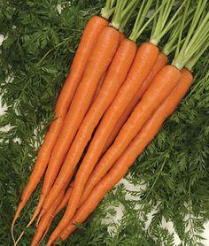 Carrot, Sugarsnax Hybrid, , large