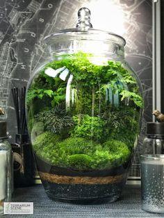 Terrarium #microjardines #terrarios #paisajismo