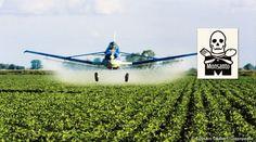 Protest - Stop Monsanto Soy! - Rainforest Rescue