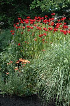 Bee Balm, Yarrow and Grasses in bloom Eco Garden, Gnome Garden, Dream Garden, Garden Plants, Lawn And Landscape, Garden Landscape Design, Garden Landscaping, Outdoor Plants, Outdoor Gardens