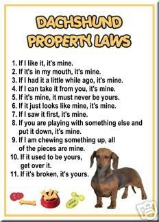 My miniature daschund does all of these!!!  Oh how I love him so!!!!!