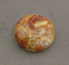 Agatized fossil coral Fossilized Coral, River Rocks, Cool Rocks, Rock Collection, Rocks And Gems, Agates, Corals, Rocks And Minerals, Tapestries