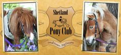 First rides 2 1/2 01372 844 077 or 07840 982 293  Our ponies are at:  Blue Bell Lane, Stoke Road  Stoke D'Abernon, Near Cobham  Surrey, KT11 3PU  info@shetlandponyclub.co.uk  www.shetlandponyclub.co.uk    Small Ponies... Big Dreams Shetland Ponies, pony photos, pony pictures, horsey videos, pony fun - Ponies