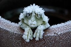 Some frogs can stay alive when frozen