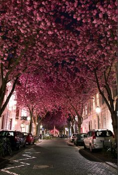 this would so beautiful to walk under