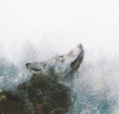 Negative Thinking Changes Your Brain: So Which Wolf Are You Feeding? | Annie Wright Psychotherapy | Berkeley, CA | www.anniewrightpsychotherapy.com