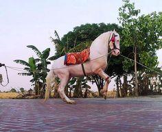 DancIng Marwari Horse by Horses Of India, via Flickr