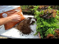 Understanding Bagged Garden Soil Products for Containers: What They Are & My Favorite Bagged Mix - YouTube