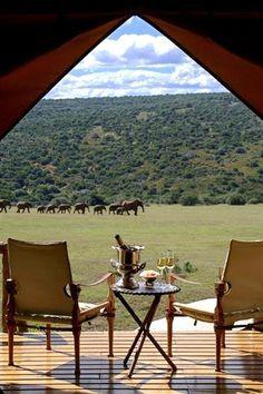 Safari Cameroon | Africa #travel