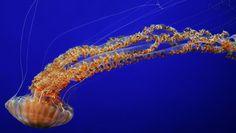 © Monterey Bay Aquarium