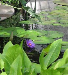 Plantas acuáticas principales