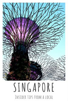 Supertrees, Gardens by the Bay, Singapore | Read more on my travel blog: Singapore - insider tips from a local. About the best time to travel there, accommodation, restaurants and sights.