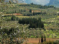 wine regions nemea-gaia Wine And Spirits, Wineries, Gaia, Vineyard, Greece, Germany, Island, Places, Photos