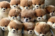 Boo The Dog Hiding With A Bunch Of Boo's. Can you find the real Boo The Dog in this photo. Animals And Pets, Baby Animals, Funny Animals, Cute Animals, Funny Dogs, Small Animals, Plush Animals, Wild Animals, Small Dogs