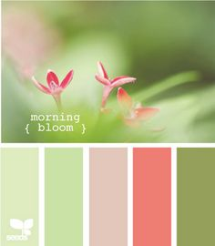 design seeds: morning bloom  Color Palette - Paint Inspiration- Paint Colors- Paint Palette- Color- Design Inspiration