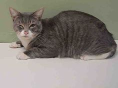 """ANGUS - A1037177 - - Manhattan **TO BE DESTROYED 05/28/15** Angus winks because he knows a secret—he knows that he is the PERFECT companion for some lucky person; he knows he is a once-in-a-lifetime soulmate. Angus is only about 2 years old but he seems to posess a great depth of wisdom that belies his young age. He has been a bit tentative at the shelter, cautiously sniffing his surroundings as if to ask, """"Is this okay for me?"""" Of course, nothing about t"""