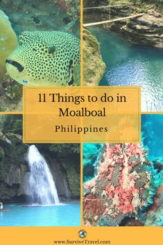 Check out these 11 awsome things to do in Moalboal, Moalboal Cebu, Moalboal Diving, Moalboal Beaches, Moalboal Philippines #philippines #cebu https://www.survivetravel.com/awesome-things-to-do-in-moalboal PIN THIS FOR LATER!