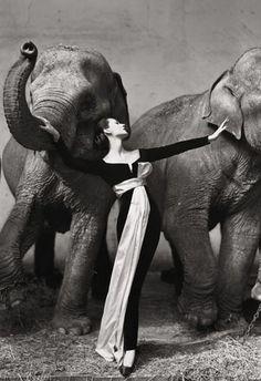 Dovima and Avedon and Elephants. I love the dress and the elephants!