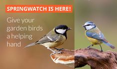 Get free Outlook email and calendar, plus Office Online apps like Word, Excel and PowerPoint. Sign in to access your Outlook, Hotmail or Live email account. Bird Food, Helping Hands, Animals, Animales, Animaux, Animal, Animais