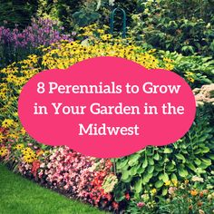 Looking for low-maintenance plants for your garden. Here are 8 perennials native to the Midwest.