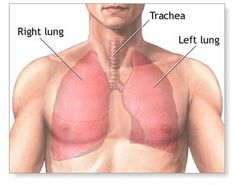 Mesothelioma Lung X ray Histology CXR CT Cancer Ribbon Cytology ...