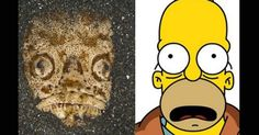 Indonesian fish with the face of Homer Simpson