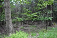 Half Acre Wooded Lot in Holiday Pocono Community
